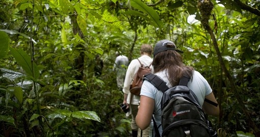 A Walking Excursion in the Amazon is an amazing experience on your next Peruvian vacation.