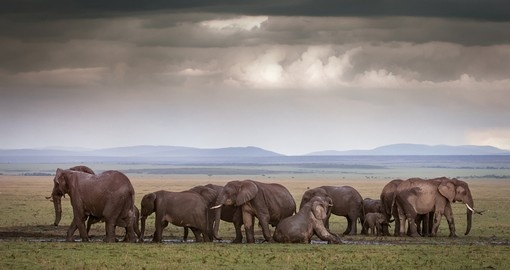 Discover Maasai Mara National Reserve on your next Kenya tours.