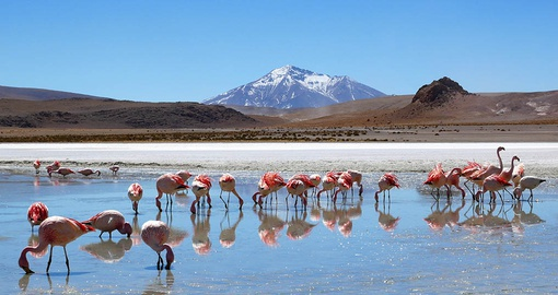 Spot local wildlife on your Bolivia vacation