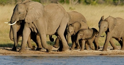Explore wildlife and watch the magic in Hwange National Park during your next South Africa tours.