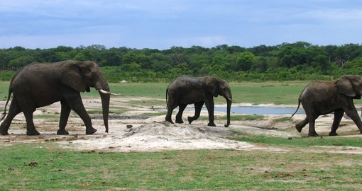 Elephant sightings during a Kruger walking safari is the perfect photograph moment during any South Africa vacation.