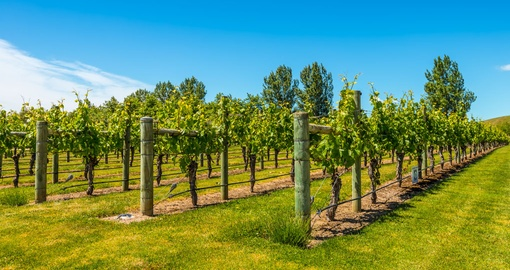 Enjoy some of the best food and wine in Hawkes Bay on your New Zealand Vacation