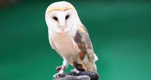 Beautiful white owl in Hong Kong's Ocean Park
