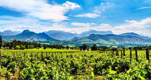 A visit to the Vineyards of the Cape Winelands in the Franschhoek Valley is included in your South African vacation