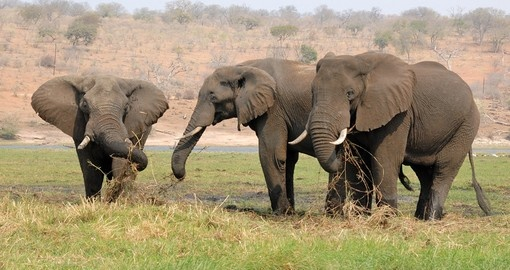 Visit Chobe National Park on your Botswana safari tour and see large herds of African Elephants