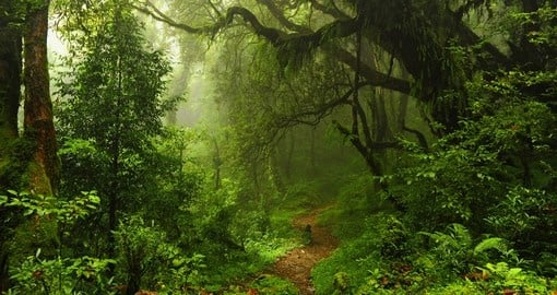Forest within Nepal