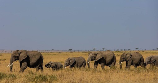 The elephant population of the Masai Mara has increased 72% since 2014