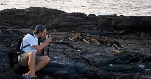 Get up close with the indigenous wildlife Galapagos Cruises