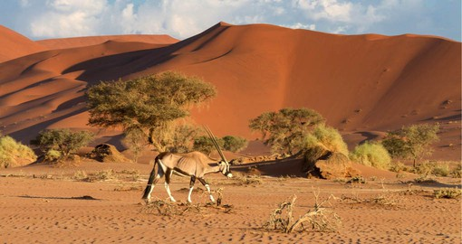 Despite it's harsh desert conditions Sossusvlei supports a wide variety of plants and animals