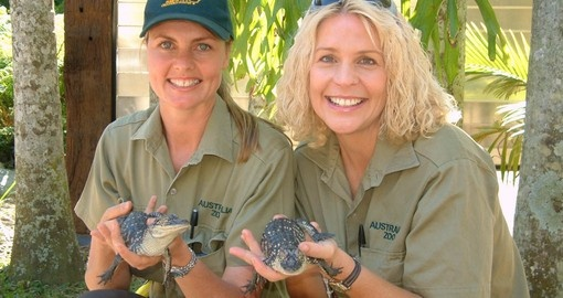 Travel on the Croc Express to Australia Zoo from either Brisbane or the Gold Coast as part of your Australian Vacation