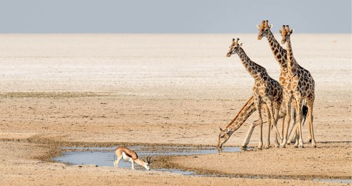 Etosha National Park is unique in Africa, it's massive salt pan so large it can be seen from space