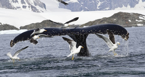 Christmas in Antarctica will be a whale of a time