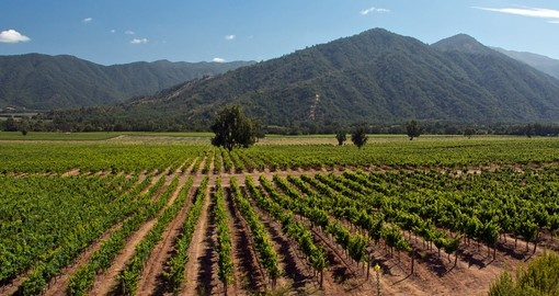 Explore a vast winery with local guides on this Chile tour