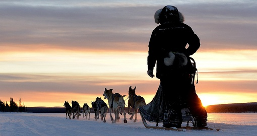 It is once in a life time experience to hunt northern lights by dog sledding during Swedish vacations.