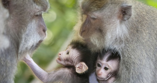 Family of Monkey's can be seen at MonkeyForest