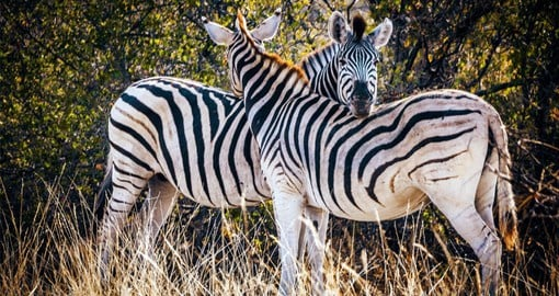 Makgadikgadi Pans National Park supports one of Africa's biggest zebra populations