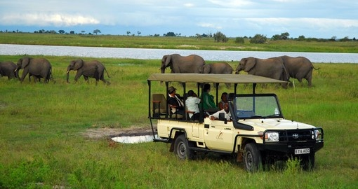 Game drive offers the best wildlife experience for all Botswana tours.