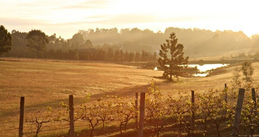 Wander through the Hunter Valley on one of your next Trips to Australia to get a sense of the time and effort that goes into the process of making wine in Australia.