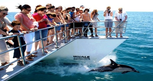 Take a catamaran cruise through the Hauraki Gulf Marine Park and spot wildlife during your New Zealand Vacation