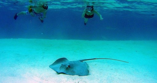 In Tahiti you can snorkel in shallow waters with the rays