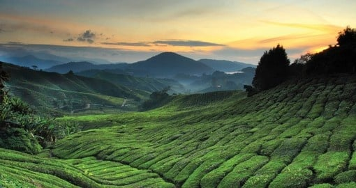 Immerse yourself in the natural landscape that is the Cameron Highlands on your Malaysia Tour