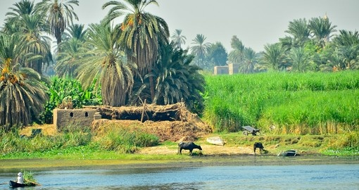 Nile riverside - rural life