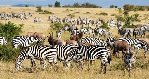 One of nature's wonders, the annual Great Migration involves over 2 million animals