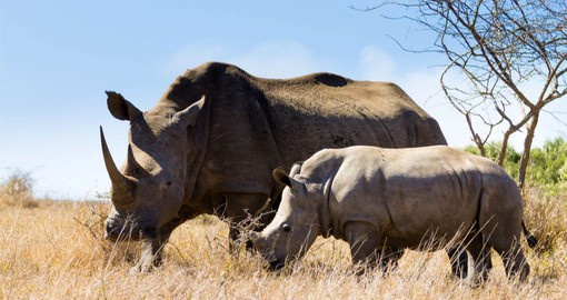 The oldest proclaimed reserve in Africa, Hluhluwe Imfolozi and is largely responsible for saving the White Rhino from extinction