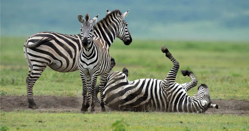 Your Tanzania vacations visits the Serengeti National Park