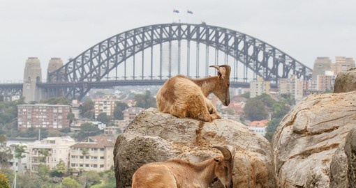 You will visit the Taronga Zoo during your trip in Australia.