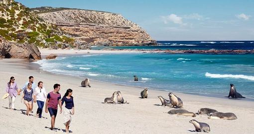 Seal Island will be one of the highlights of your Australia vacation
