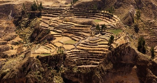 Visit Colca Canyon on your Peru Vacation