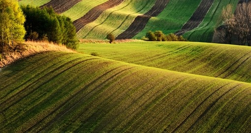 Wavy green fields
