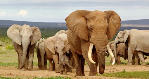 The third largest in South Africa, Addo Elephant National Park is home more than 350 of them, 280 Cape Buffalo and Black Rhino