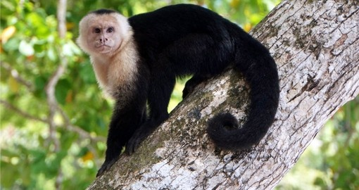 Experience the unique wildlife of the national park on your Costa Rica Vacations