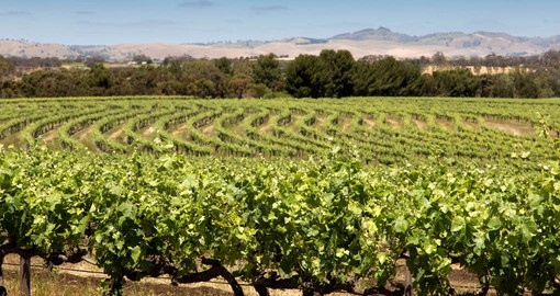 Visit one of the many vineyards that are located within Barossa on your next Australian Vacation