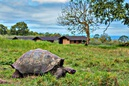 Galapagos Magic Tented Camp