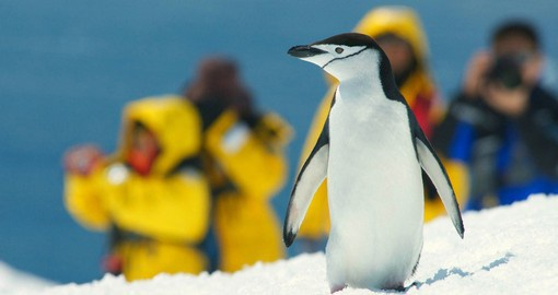 Antarctica is a photographer's ultimate Christmas present