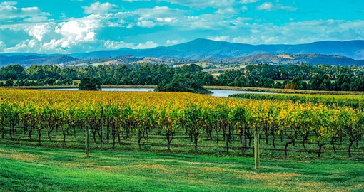 The Yarra Valley is one of the oldest wine regions in Australia