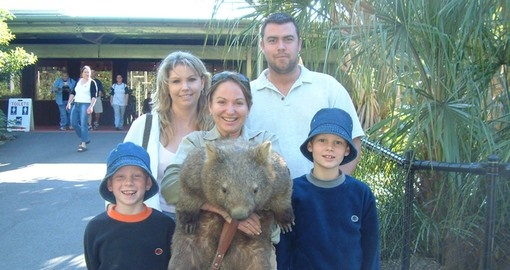 Include a Wombat encounter at the Australia Zoo as part of your Australia Vacation