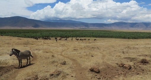 Discover Ngorongoro Crater on your next South Africa Tours.