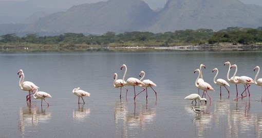 You will see a variety of birdlife on your holiday in Kenya