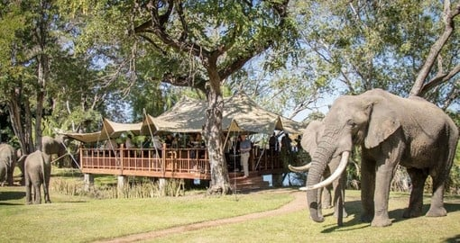 Visit the The Elephant Cafe on your Zambia Safaris