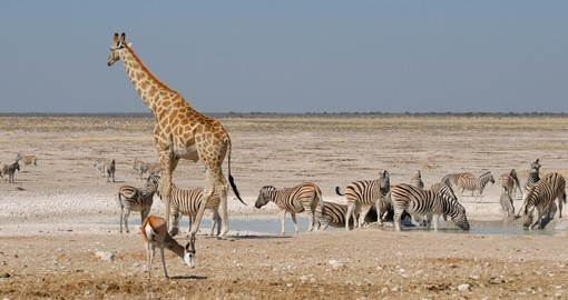 Discover animal life in the Namib desert.
