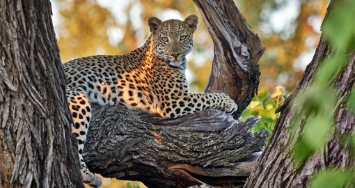 Beyond Savuti: A Botswana Safari travel guide with Maps for exploring the Okavango Linyanti Moremi Chobe