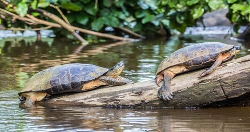A visit to Tortuguero National Park is part of your Costa Rica vacation package
