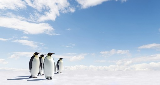 Penguins and other native Antarctic wildlife species are a highlight of your Antarctic Vacation