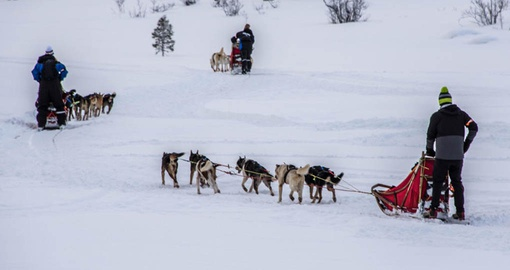 Try dog sledding on your Norway Vacation