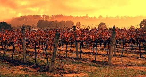 The Hunter Valley is Australia's premier wine growing district and is a great inclusion for your Australia vacation.