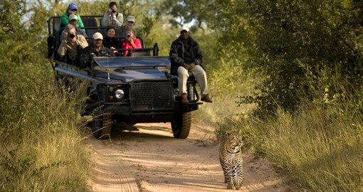 Tinga Lodge is the perfect base for your South African Safari giving you the opportunity to spot the Big 5 including the elusive Leopard